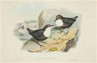 [birds of asia]: five plates (5 works) by john gould